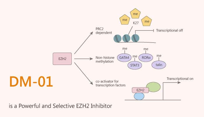 DM 01 is a Powerful and Selective EZH2 Inhibitor 2020 08 04 - DM-01 is a Powerful and Selective EZH2 Inhibitor