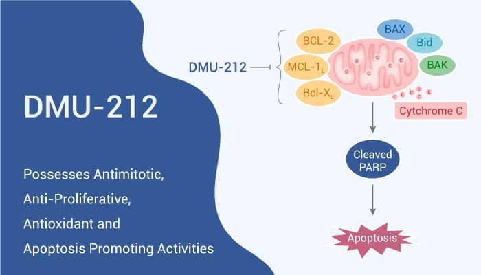 DMU 212 Possesses Antimitotic Anti Proliferative Antioxidant and Apoptosis Promoting Activities 2020 12 24 - DMU-212 Possesses Antimitotic, Anti-Proliferative, Antioxidant and Apoptosis Promoting Activities