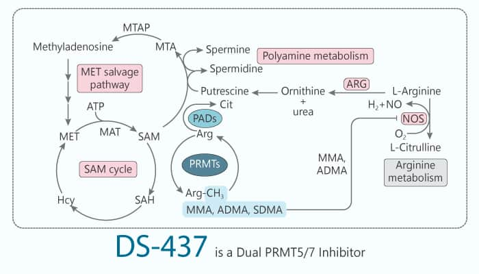 DS 437 is a Dual PRMT5 7 Inhibitor 2020 02 25 - DS-437 is a Dual PRMT5/7 Inhibitor