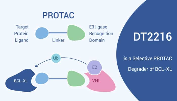 DT2216 is a Selective PROTAC Degrader of BCL XL 2020 11 12 - DT2216 is a Selective PROTAC Degrader of BCL-XL