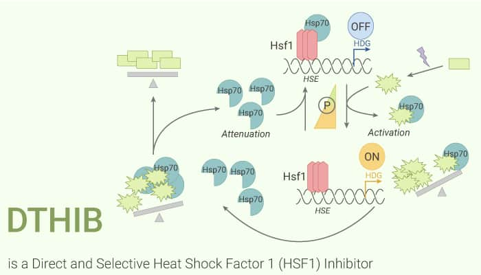 DTHIB is a Direct and Selective Heat Shock Factor 1 HSF1 Inhibitor 2121 03 09 - DTHIB is a Direct and Selective Heat Shock Factor 1 (HSF1) Inhibitor
