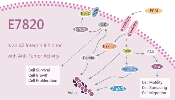 E7820 is an α2 Integrin Inhibitor with Anti Tumor Activity 2020 11 05 - E7820 is an α2 Integrin Inhibitor with Anti-Tumor Activity