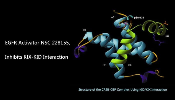 EGFR Activator NSC 228155 Inhibits KIX KID Interaction 2019 05 03 - NSC 228155, a EGFR Activator, Inhibits KIX-KID Interaction