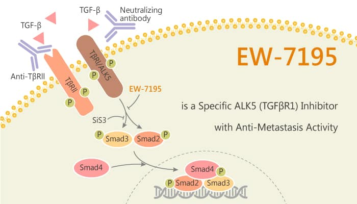 EW 7195 is a Specific ALK5 TGFβR1 Inhibitor with Anti Metastasis Activity 2020 07 28 - EW-7195 is a Specific ALK5 (TGFβR1) Inhibitor with Anti-Metastasis Activity