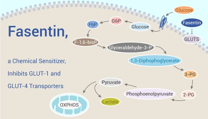 Fasentin a Chemical Sensitizer Inhibits GLUT 1 and GLUT 4 Transporters 2020 02 03 - Fasentin, a Chemical Sensitizer, Inhibits GLUT-1 and GLUT-4 Transporters