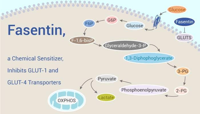 Fasentin a Chemical Sensitizer Inhibits GLUT 1 and GLUT 4 Transporters 2020 02 03 - Fasentin, a Chemical Sensitizer, Inhibits GLUT-1 and GLUT-4 Transporters