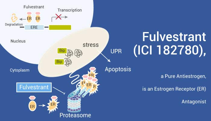 Fulvestrant ICI 182780 a Pure Antiestrogen is an Estrogen Receptor ER Antagonist 2021 09 01 - Fulvestrant (ICI 182780), a Pure Antiestrogen, is an Estrogen Receptor (ER) Antagonist