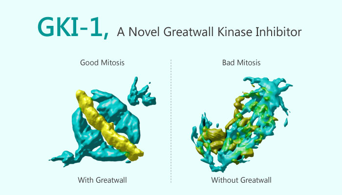 GKI 1 Greatwall Kinase Inhibitor breast cancer 2019 04 13 - Novel Greatwall Kinase Inhibitor GKI-1