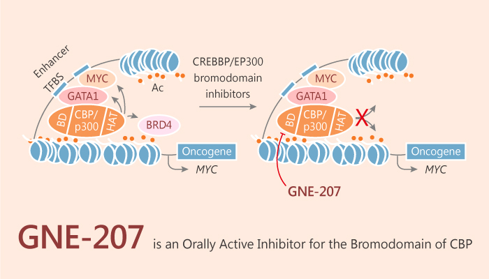 GNE 207 is an Orally Active Inhibitor for the Bromodomain of CBP 2019 08 01 1 - GNE-207 is an Orally Active Inhibitor for the Bromodomain of CBP