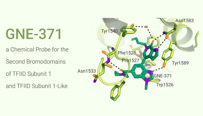 GNE 371 a Chemical Probe for the Second Bromodomains of TFIID Subunit 1 and TFIID Subunit 1 Like 2020 12 09 - GNE-371, a Chemical Probe for the Second Bromodomains of TFIID Subunit 1 and TFIID Subunit 1-Like