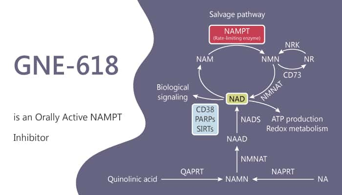 GNE 618 is a Orally Active NAMPT Inhibitor 2019 11 28 - GNE-618 is a Orally Active NAMPT Inhibitor