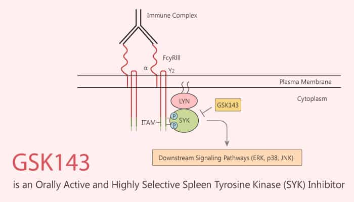 GSK143 is an Orally Active and Highly Selective Spleen Tyrosine Kinase SYK Inhibitor 2020 07 07 - GSK143 is an Orally Active and Highly Selective Spleen Tyrosine Kinase (SYK) Inhibitor