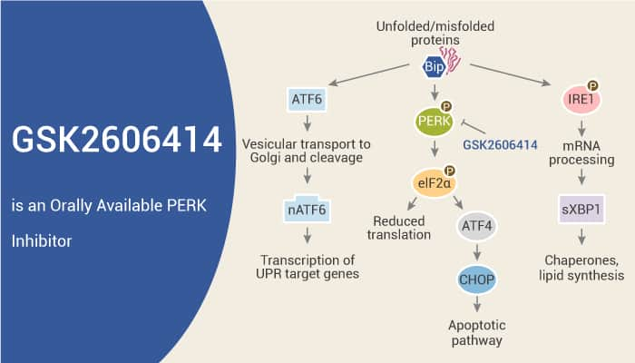 GSK2606414 is an Orally Available PERK Inhibitor 2021 09 25 - GSK2606414 is an Orally Available PERK Inhibitor