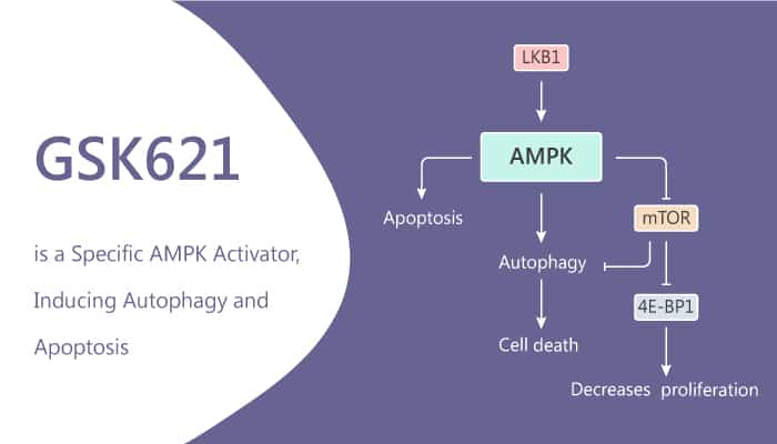 GSK621 is a Specific AMPK Activator Inducing Autophagy and Apoptosis 2020 07 08 - GSK621 is a Specific AMPK Activator, Inducing Autophagy and Apoptosis