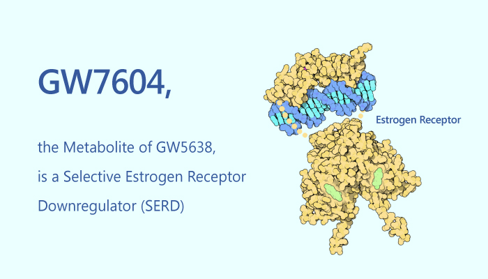 GW7604 the Metabolite of GW5638 is a Selective Estrogen Receptor Downregulator SERD 2019 06 27 - GW7604, the Metabolite of GW5638, is a Selective Estrogen Receptor Downregulator (SERD)