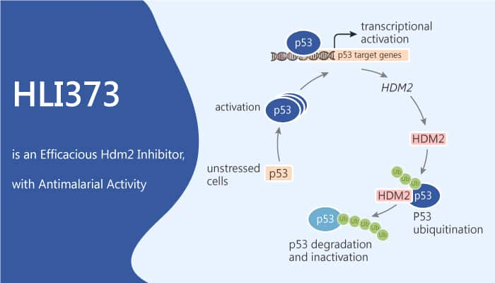 HLI373 is an Efficacious Hdm2 Inhibitor with Antimalarial Activity 2020 07 04 - HLI373 is an Efficacious Hdm2 Inhibitor, with Antimalarial Activity