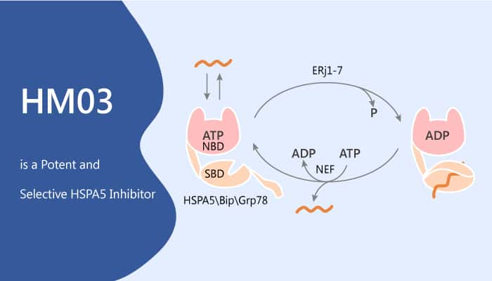 HM03 is a Potent and Selective HSPA5 Inhibitor 2020 06 17 - HM03 is a Potent and Selective HSPA5 Inhibitor