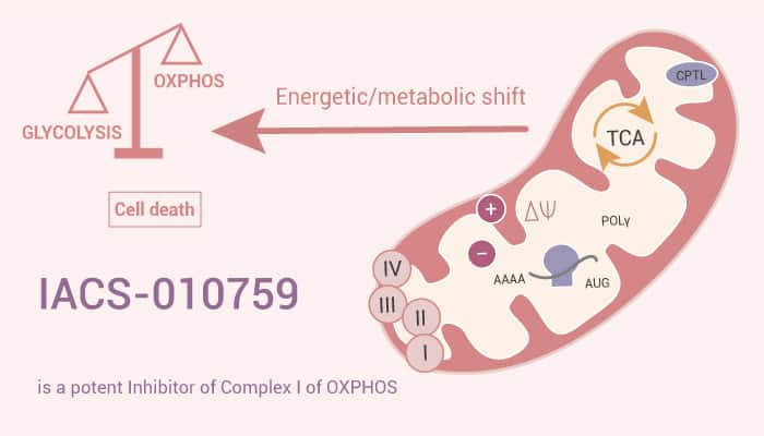 IACS 010759 is a Potent Inhibitor of Complex I of OXPHOS 2021 1006 - IACS-010759 is a Potent Inhibitor of Complex I of OXPHOS