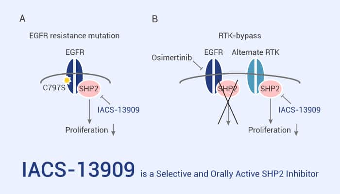 IACS 13909 is a Selective and Orally Active SHP2 Inhibitor 2021 03 11 - IACS-13909 is a Selective and Orally Active SHP2 Inhibitor