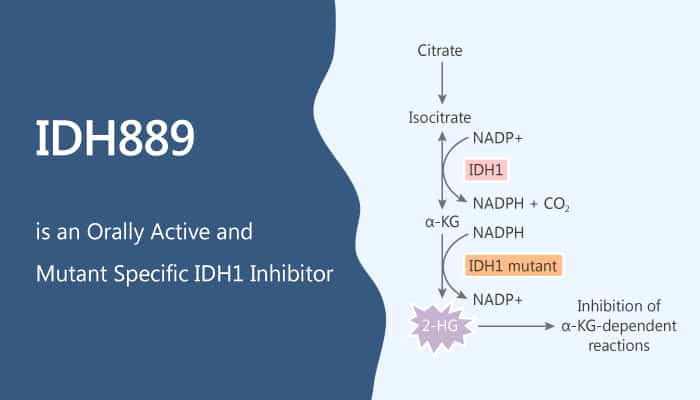IDH889 is an Orally Available and Mutant Specific IDH1 Inhibitor 2019 09 18 - IDH889 is an Orally Available and Mutant Specific IDH1 Inhibitor