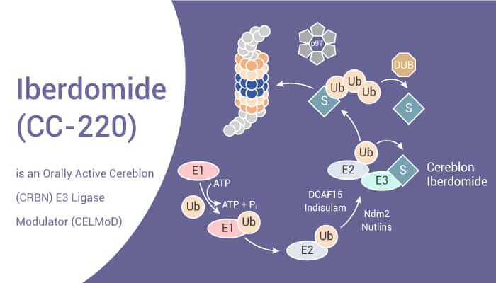 Iberdomide CC 220 is an Orally Active Cereblon CRBN E3 Ligase Modulator CELMoD 2021 09 02 - Iberdomide (CC-220) is an Orally Active Cereblon (CRBN) E3 Ligase Modulator (CELMoD)