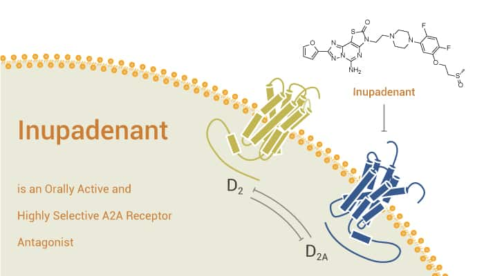 Inupadenant is an Orally Active and Highly Selective A2A Receptor Antagonist 2021 07 21 - Inupadenant is an Orally Active and Highly Selective A2A Receptor Antagonist
