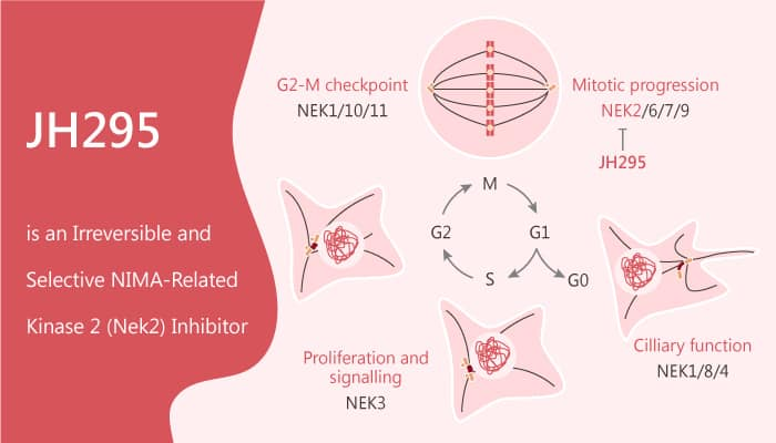 JH295 is an Irreversible and Selective NIMA Related Kinase 2 Nek2 Inhibitor 2020 08 25 - JH295 is an Irreversible and Selective NIMA-Related Kinase 2 (Nek2) Inhibitor
