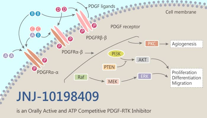 JNJ 10198409 is an Orally Active and ATP Competitive PDGF RTK Inhibitor 2019 11 11 - JNJ-10198409, an orally active PDGF-RTK inhibitor