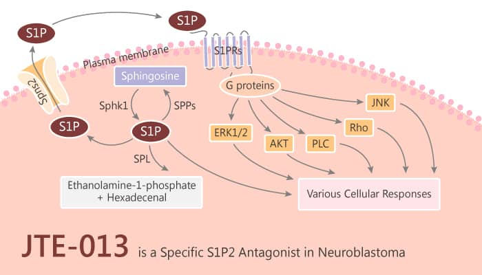 JTE 013 is a Specific S1P2 Antagonist in Neuroblastoma 2019 10 26 - JTE-013 is a Specific S1P2 Antagonist in Neuroblastoma