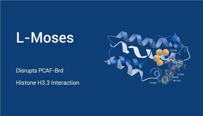 L Moses Disrupts PCAF Brd Histone H3.3 Interaction 2021 04 21 - L-Moses Disrupts PCAF-Brd Histone H3.3 Interaction