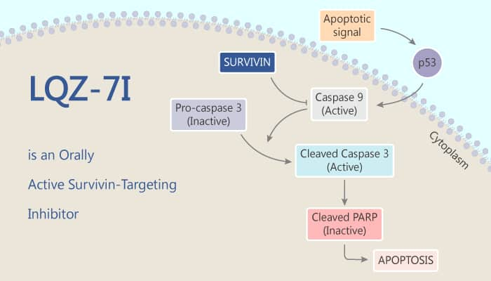 LQZ 7I is an Orally Active Survivin Targeting Inhibitor 2020 07 11 - LQZ-7I is an Orally Active Survivin-Targeting Inhibitor