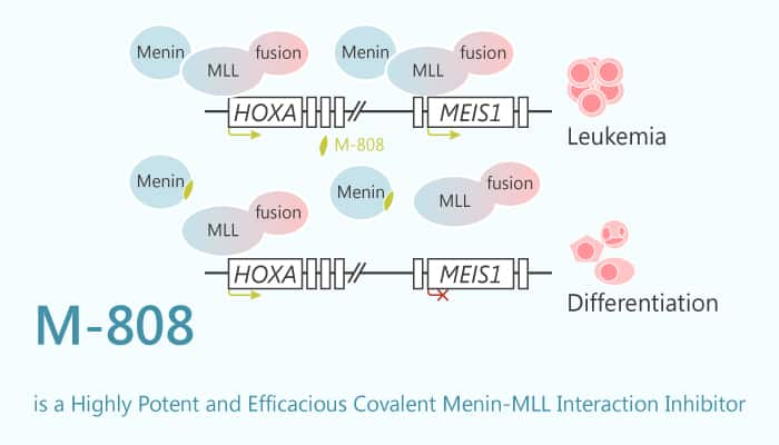 M 808 is a Highly Potent and Efficacious Covalent Menin MLL Interaction Inhibitor 2020 07 14 - M-808 is a Highly Potent and Efficacious Covalent Menin-MLL Interaction Inhibitor
