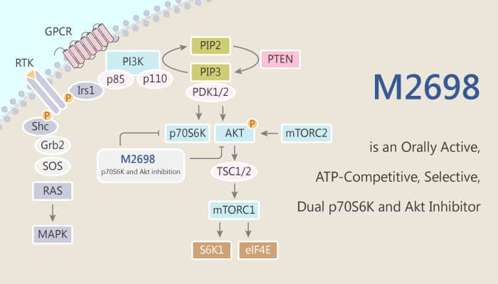 M2698 is an Orally Active ATP Competitive Selective Dual p70S6K and Akt Inhibitor 2020 04 25 - M2698 is an Orally Active, ATP-Competitive, Selective, Dual p70S6K and Akt Inhibitor