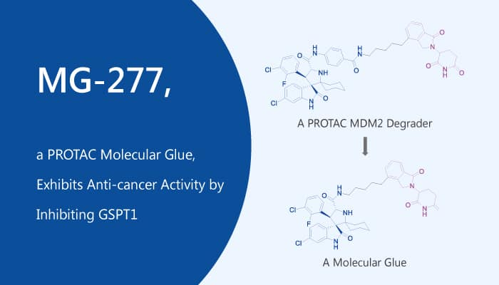 MG 277 a PROTAC Molecular Glue Exhibits Anti cancer Activity by InhibitingG SPT1 2019 12 19 - MG-277, a PROTAC Molecular Glue, Exhibits Anti-cancer Activity by Inhibiting GSPT1