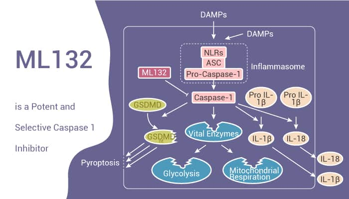 ML132 is a Potent and Selective Caspase 1 Inhibitor 2020 12 15 - ML132 is a Potent and Selective Caspase 1 Inhibitor