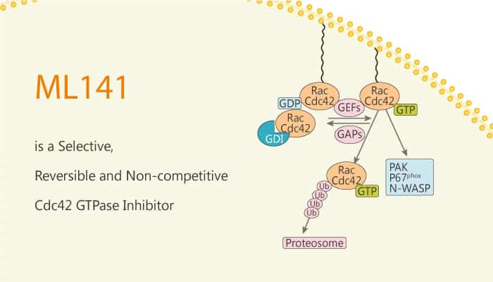 ML141 is a Selective Reversible and Non competitive Cdc42 GTPase Inhibitor 2020 03 17 - ML141 is a Selective, Reversible and Non-competitive Cdc42 GTPase Inhibitor