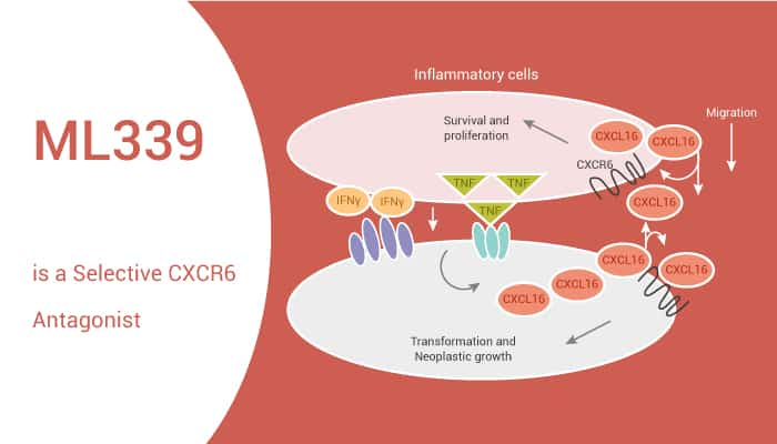 ML339 is a Selective CXCR6 Antagonist 2021 05 12 - ML339 is a Selective CXCR6 Antagonist