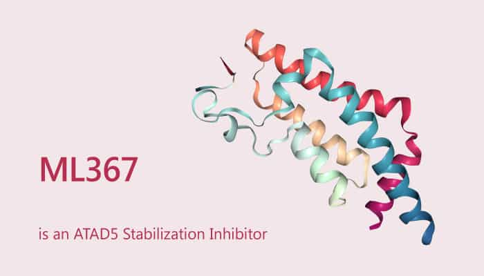 ML367 is an ATAD5 Stabilization Inhibitor 2019 08 03 - ML367 is an ATAD5 Stabilization Inhibitor
