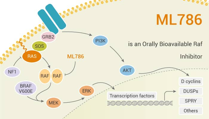 ML786 is an Orally Bioavailable Raf Inhibitor 2020 01 15 - ML786 is an Orally Bioavailable Raf Inhibitor