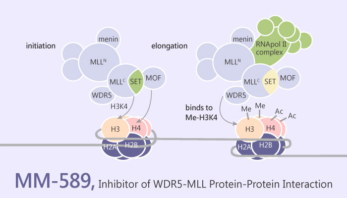 MM 589 Inhibitor of WDR5 MLL Protein Protein Interaction 2019 05 15 - MM-589, a Cell-Permeable Inhibitor of WDR5-MLL Protein Protein Interaction