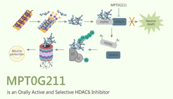 MPT0G211 is an Orally Active and Selective HDAC6 Inhibitor 2020 09 15 - MPT0G211 is an Orally Active and Selective HDAC6 Inhibitor