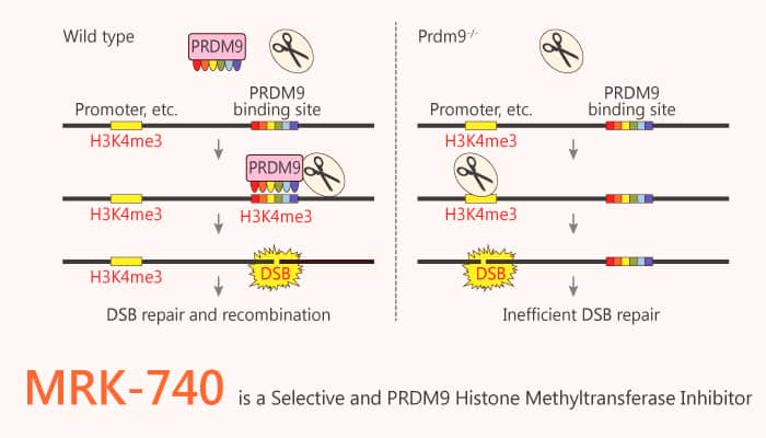 MRK 740 is a Selective and PRDM9 Histone Methyltransferase Inhibitor 2020 07 22 - MRK-740 is a Selective and PRDM9 Histone Methyltransferase Inhibitor