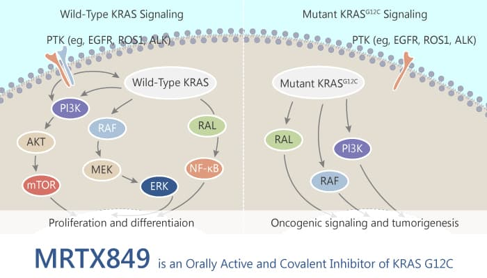 MRTX849 is an Orally Active and Covalent Inhibitor of KRAS G12C 2019 11 17 - MRTX849 is an Orally Active and Covalent Inhibitor of KRAS G12C