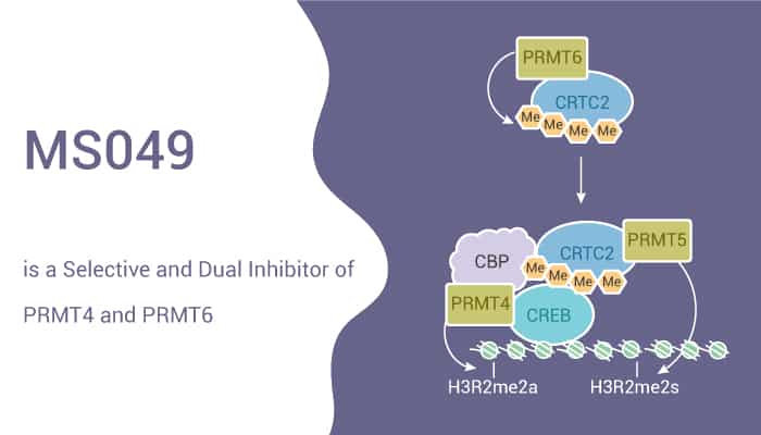MS049 is a Selective and Dual Inhibitor of PRMT4 and PRMT6 2021 04 22 - MS049 is a Selective and Dual Inhibitor of PRMT4 and PRMT6