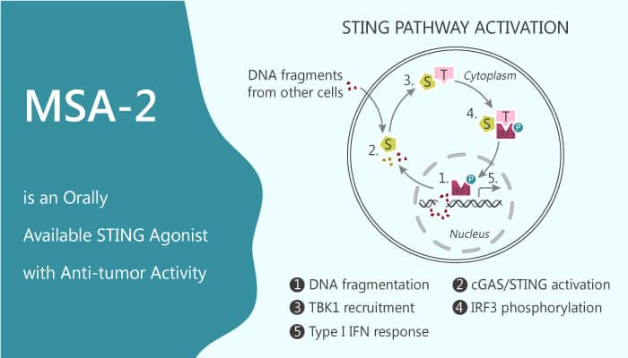MSA 2 is an Orally Available STING Agonist with Anti tumor Activity 2020 09 12 - MSA-2 is an Orally Available STING Agonist with Anti-tumor Activity