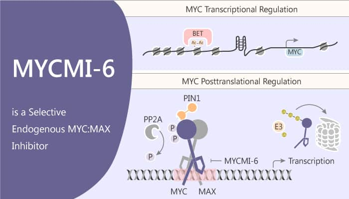 MYCMI 6 is a Selective Endogenous MYC MAX Inhibitor 2020 05 27 - MYCMI-6 is a Selective Endogenous MYC:MAX Inhibitor