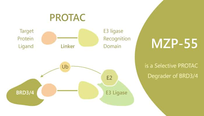 MZP 55 is a Selective PROTAC Degrader of BRD3 4 2019 07 21 - MZP-55 is a Selective PROTAC Degrader of BRD3/4