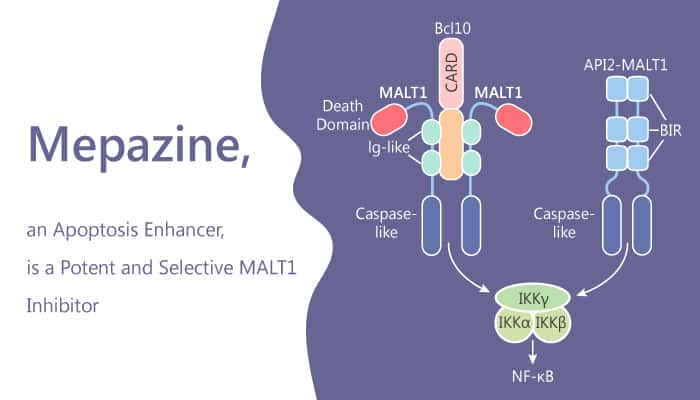 Mepazine an Apoptosis Enhancer is a Potent and Selective MALT1 Inhibitor 2020 04 09 - Mepazine, an Apoptosis Enhancer, is a Potent and Selective MALT1 Inhibitor