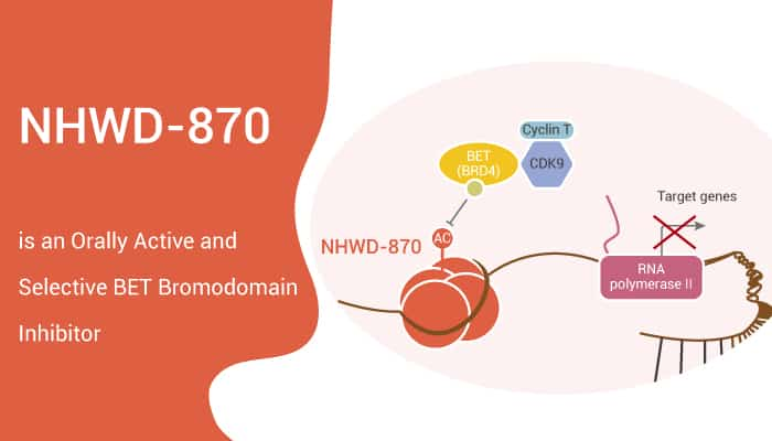 NHWD 870 is an Orally Active and Selective BET Bromodomain Inhibitor 2020 01 09 1 - NHWD-870 is an Orally Active and Selective BET Bromodomain Inhibitor