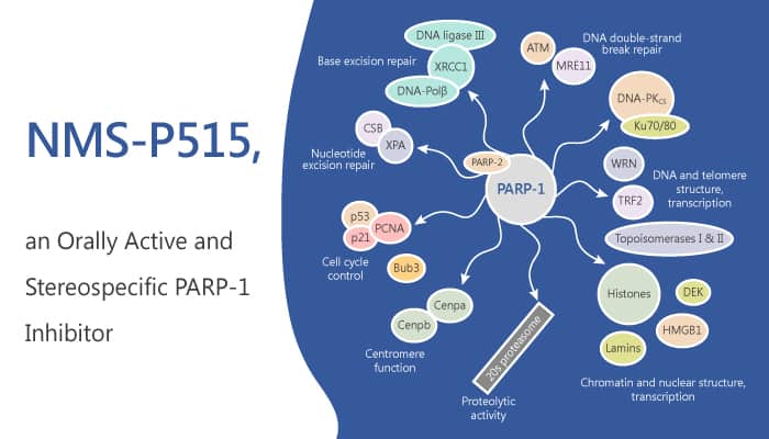 NMS P515 is an Orally Active and Stereospecific PARP 1 Inhibitor 2019 07 16 - NMS-P515 is an Orally Active and Stereospecific PARP-1 Inhibitor